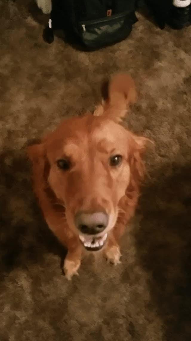 Watch and share Doggy GIFs by radddchaddd on Gfycat