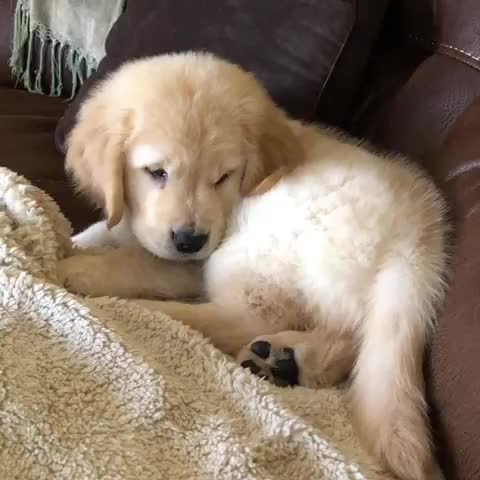 Finley the Golden Pup, What da heck is dat thing? GIFs
