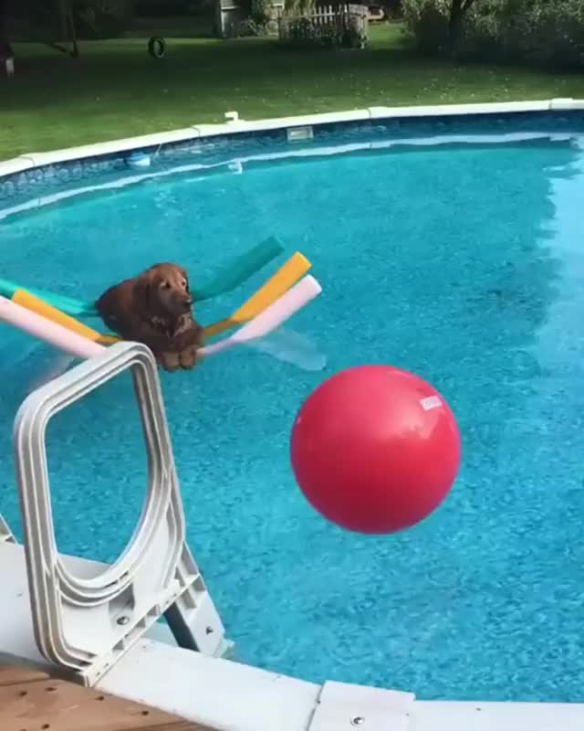 Watch and share Dog Chilling GIFs and Floating GIFs by loveofnerd on Gfycat