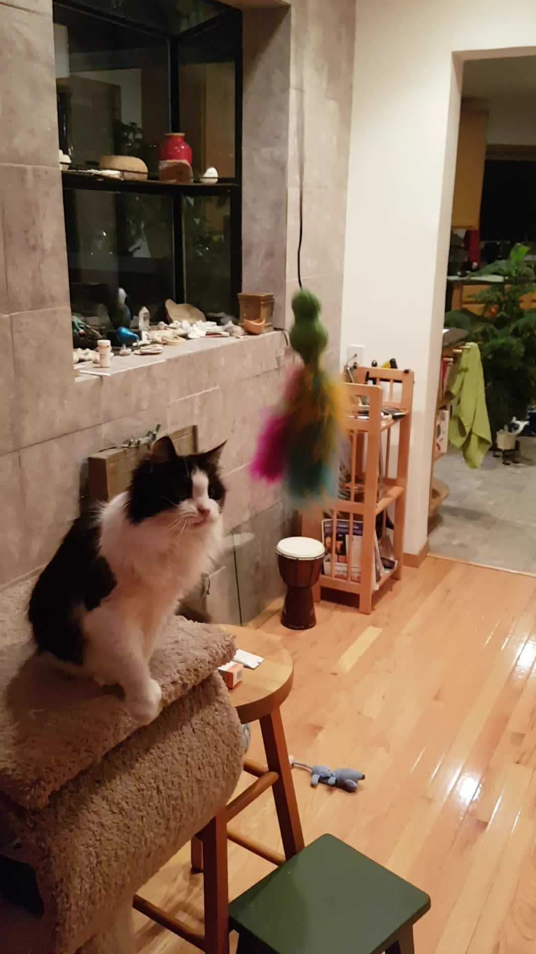 cats, Cats GIFs