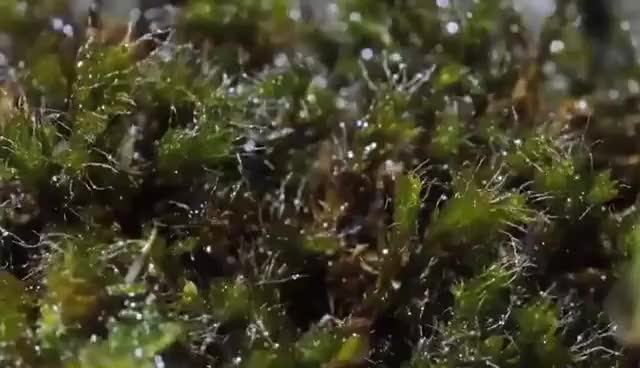 Watch and share Moss Growing Time Lapse GIFs on Gfycat