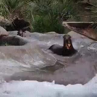 animals, aww, cute, fun, otter, otters, water slide, waterslide, Otters GIFs