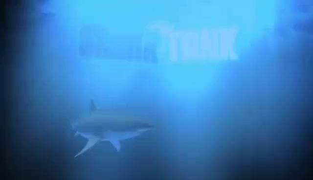 Inboard Shark Tank >> Shark Tank Inboard Gif Gfycat