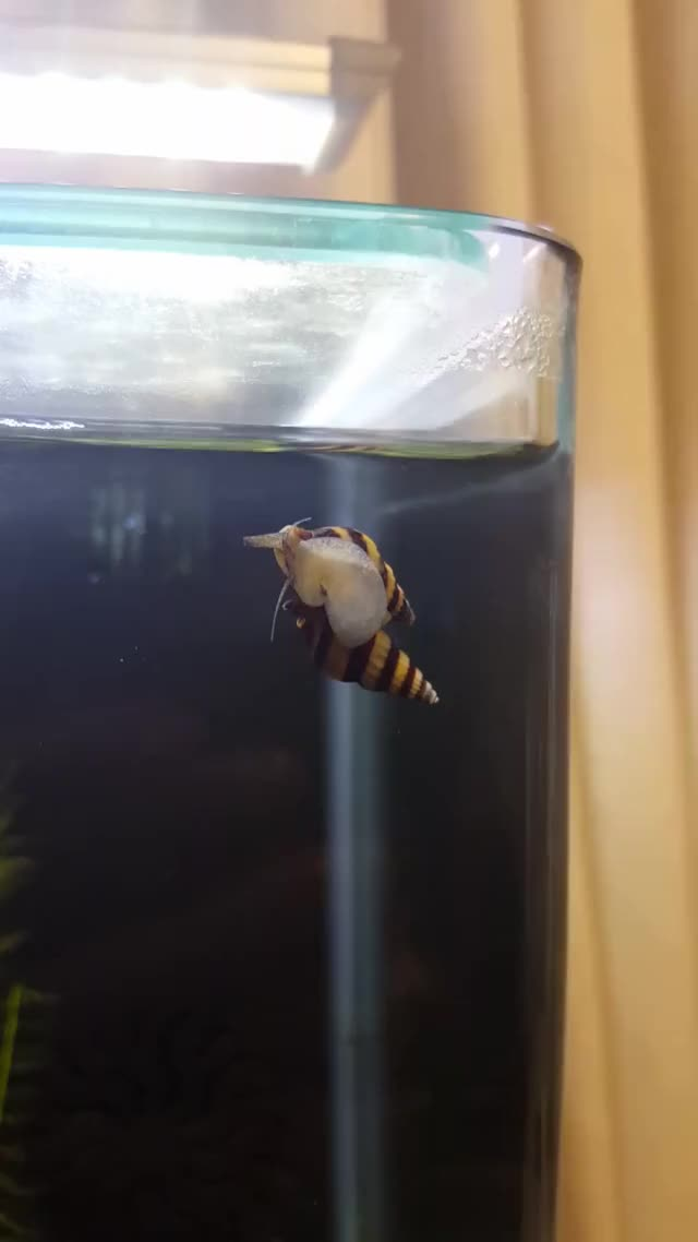 Watch Assassin GIF on Gfycat. Discover more aquariums GIFs on Gfycat