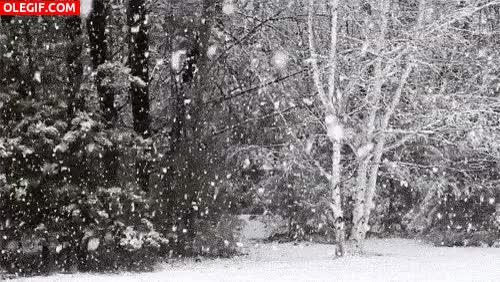 Watch and share GIF: Copos De Nieve Cayendo En El Bosque GIFs on Gfycat