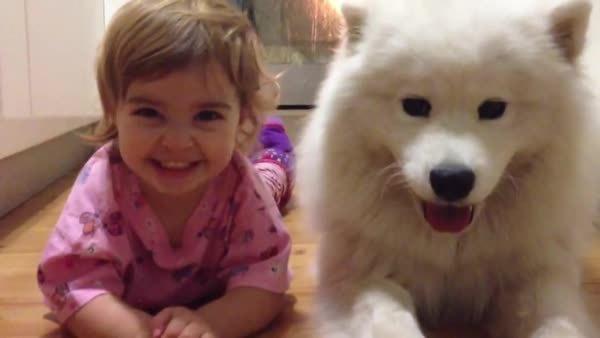 aww, doggifs, A Girl and Her Dog GIFs