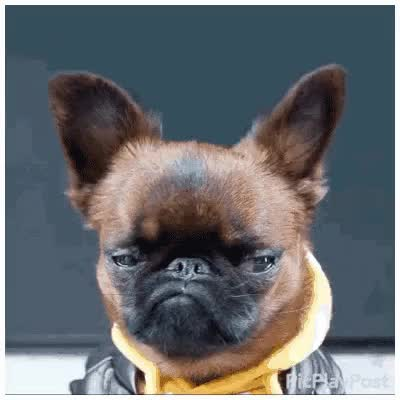 Watch and share Sad Animal GIFs on Gfycat