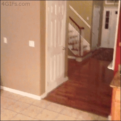 wastedgifs, I thought ghosts could walk through doors (reddit) GIFs