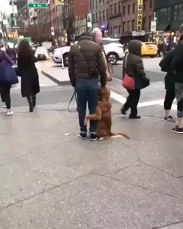 Good boy making sure everyone knows his human has been claimed GIFs