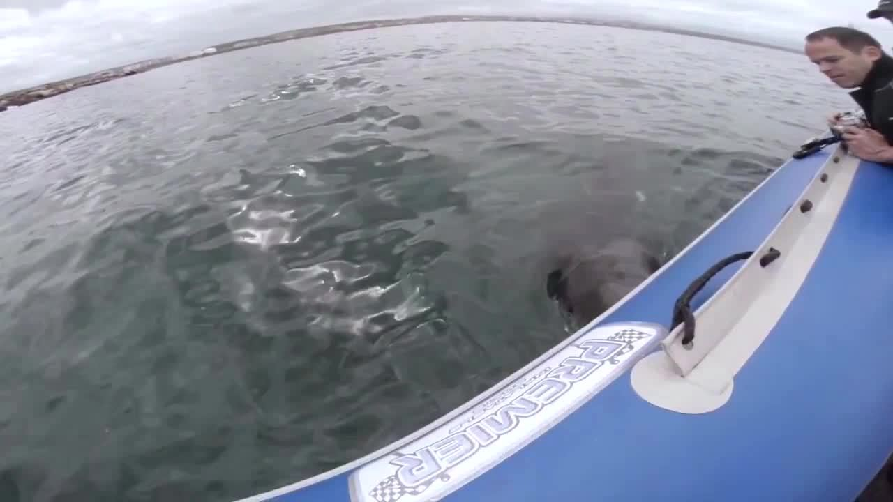 TsundereSharks, WTF, [REQUEST] You'll drown if you don't notice me! (reddit) GIFs
