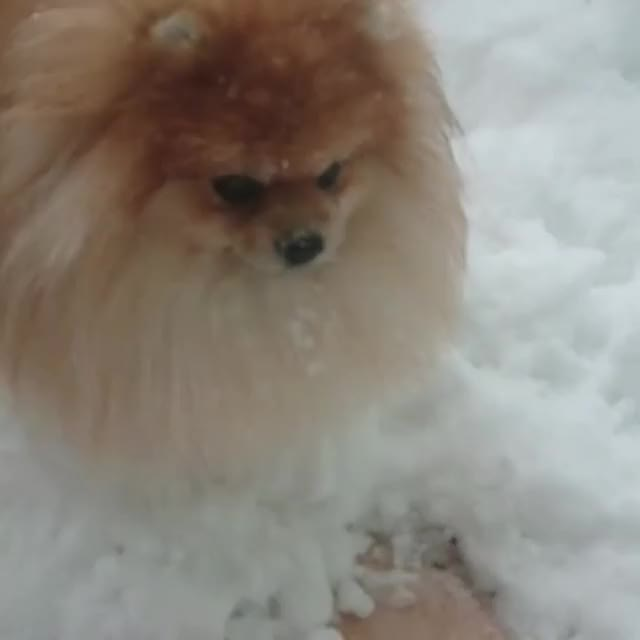 Watch and share Our First Snow ❄.!!! GIFs by Олеся on Gfycat