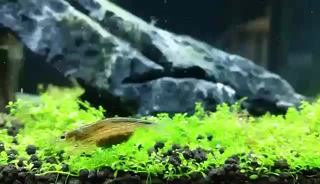 Watch and share Plantedtank GIFs by seshan on Gfycat