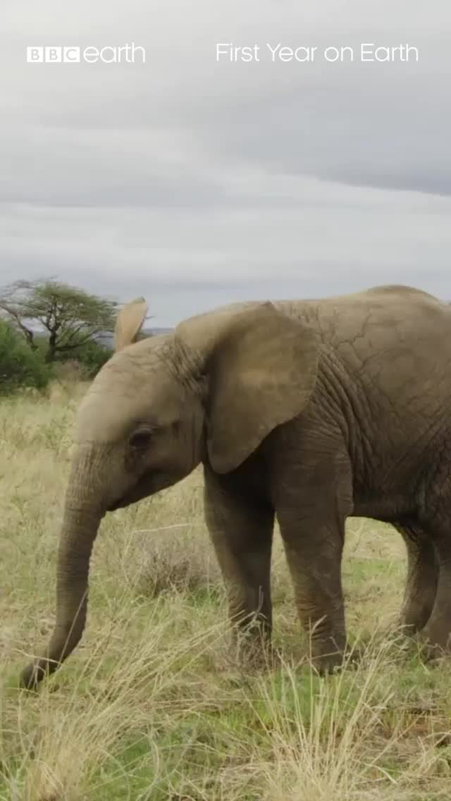 Watch and share Baby Elephant GIFs by PrviAxiom on Gfycat