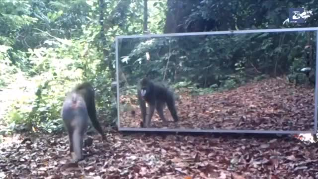 Watch and share Animals React To A Mirror GIFs by drjsfro on Gfycat