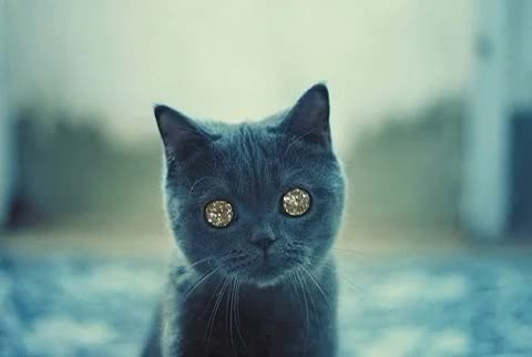 Watch stoned cat GIF on Gfycat. Discover more related GIFs on Gfycat