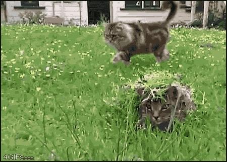 aww, cats,  GIFs