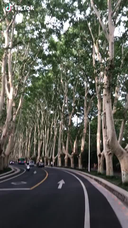 Watch Beautiful road	 GIF by TikTok (@lovexixi) on Gfycat. Discover more related GIFs on Gfycat