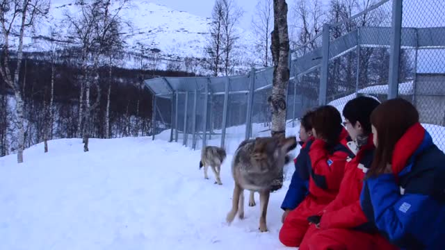 Watch and share Park GIFs and Wolf GIFs on Gfycat