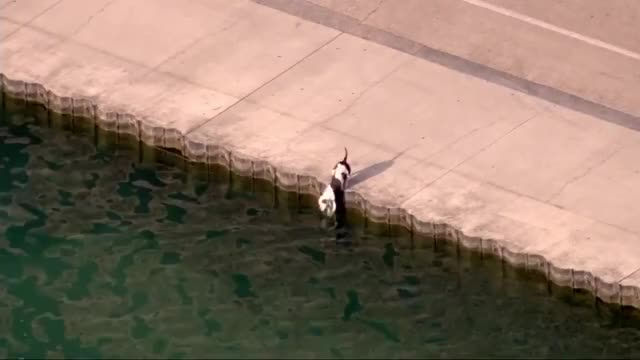 Watch dog rescue GIF by gallowboob on Gfycat. Discover more GIF Brewery, aww, chicago-police-officer-rescues-dog-from-lake-michigan-raw-vi GIFs on Gfycat