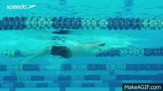 Watch and share Swim GIFs on Gfycat