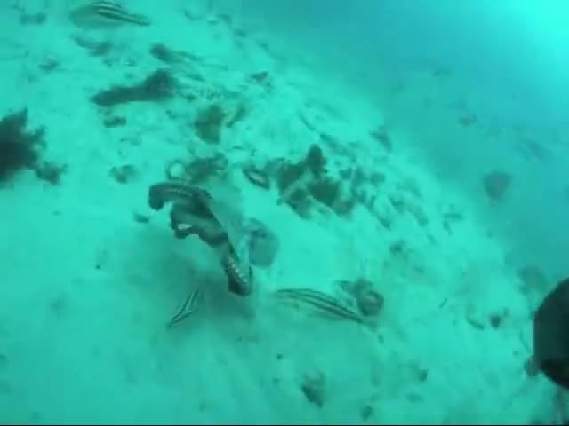 Watch and share Leatherjacket Fish GIFs and Octopus GIFs on Gfycat