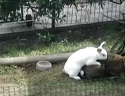 Watch this bunny GIF on Gfycat. Discover more pro, speed GIFs on Gfycat