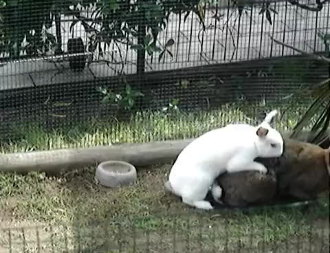 pro, speed, rabbit GIFs