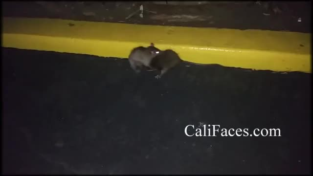 Watch and share California GIFs and Wilderness GIFs on Gfycat