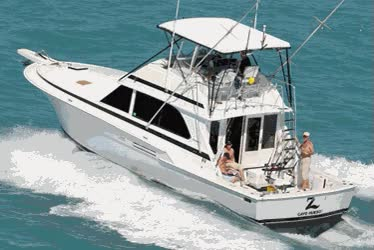 Watch and share Fishing Charter Key West GIFs on Gfycat