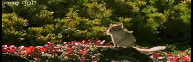 Beatbox Squirrel