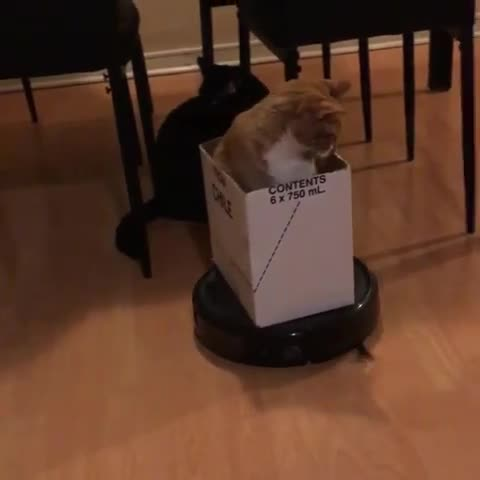 aww, cat, cats, cute, funny, Come on, it's my turn now! GIFs