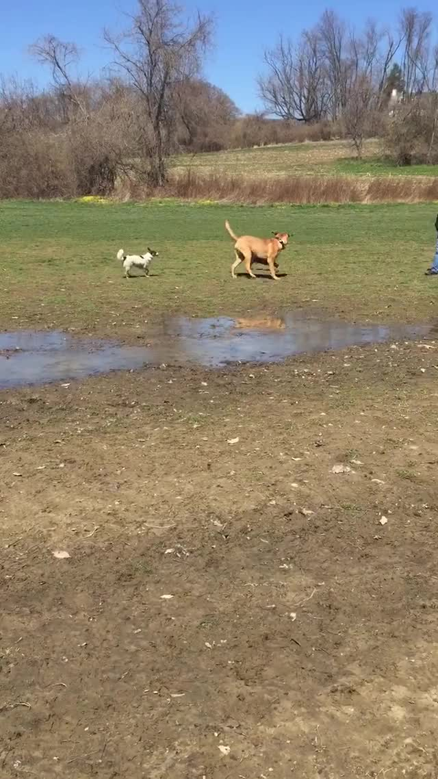 Watch and share Dogpark GIFs on Gfycat