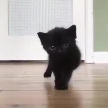 Cute Black Cat Gif By Gif Queen Ioanna Find Make Share