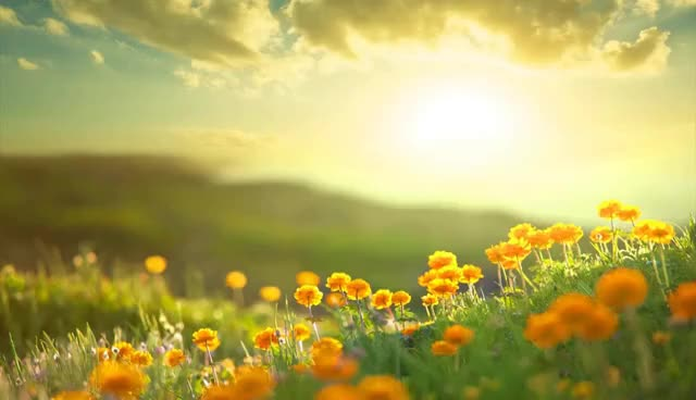 Watch and share Morning Relaxing Music - Positive Feelings And Energy GIFs on Gfycat