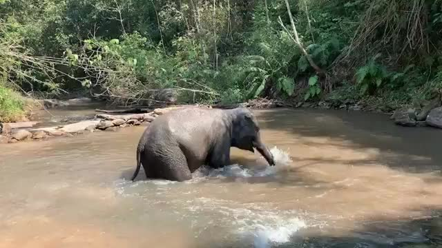 Watch goofy kid playing in the water GIF by PM_ME_STEAM_K3YS (@pmmesteamk3ys) on Gfycat. Discover more related GIFs on Gfycat