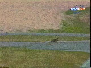 Watch Deer Gets Hit By Race Car GIF on Gfycat. Discover more related GIFs on Gfycat