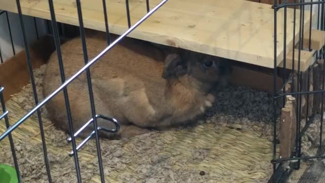 Watch Bun Bun flops GIF by @mbamford on Gfycat. Discover more related GIFs on Gfycat