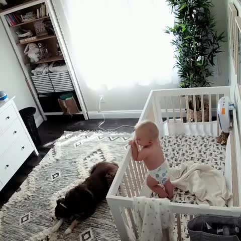 Watch and share Baby GIFs and Dog GIFs by mayaxs on Gfycat