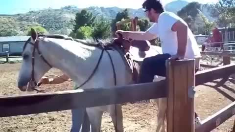 funny, fail, horse, Back in the saddle GIFs