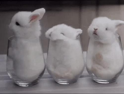 Bunnies-Sleep