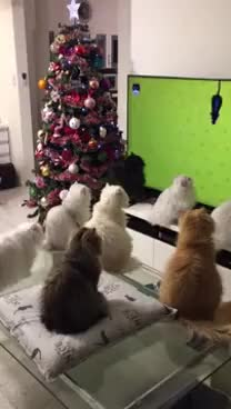 Watch Cats Watch TV Together || ViralHog GIF on Gfycat. Discover more 2017, All Tags, Japan, animals, cars, cat, cute, featured, kitten, pets, television, together, trending, tv, viralhog, watch, weird, win GIFs on Gfycat
