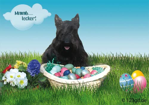 Watch and share Scottish Terrier Ostern Grußkarte Ostern-0005 GIFs on Gfycat