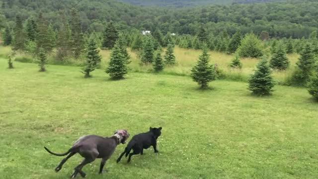 Watch BONK GIF by L  O W sound (@lowsound) on Gfycat. Discover more cute, dog GIFs on Gfycat