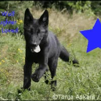 Watch and share Magic Wolf Of Horseland.com GIFs on Gfycat