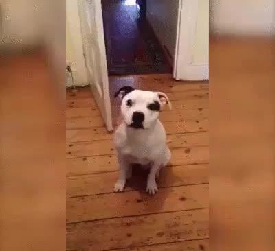 Ziggy is a good boy