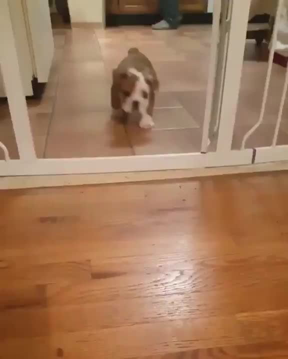 Watch and share Puppy GIFs by notmyproblem on Gfycat