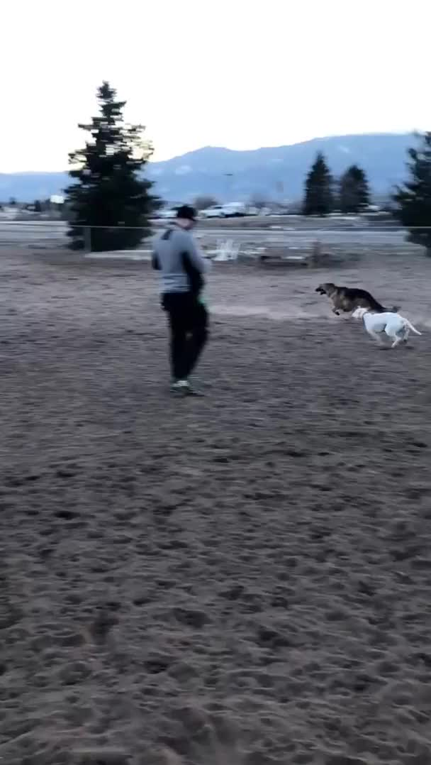 Watch and share Dog Park GIFs and Chasing GIFs by teistom on Gfycat
