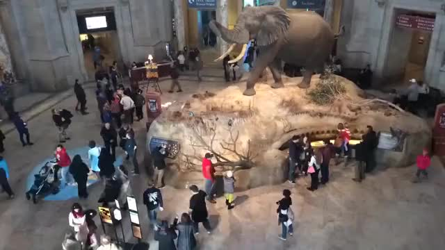 Watch and share Smithsonian GIFs and Timelapse GIFs on Gfycat