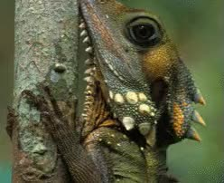 Watch and share Reptile Enclousore GIFs on Gfycat