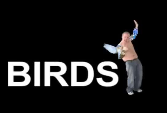 Watch Birds GIF on Gfycat. Discover more Birds GIFs on Gfycat